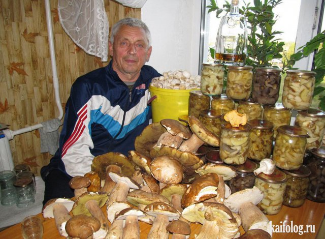 Приколы про грибы (45 фото)