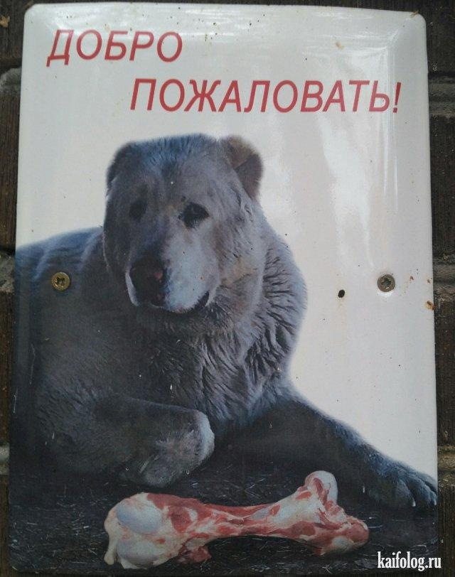 Российские приколы (50 фото)