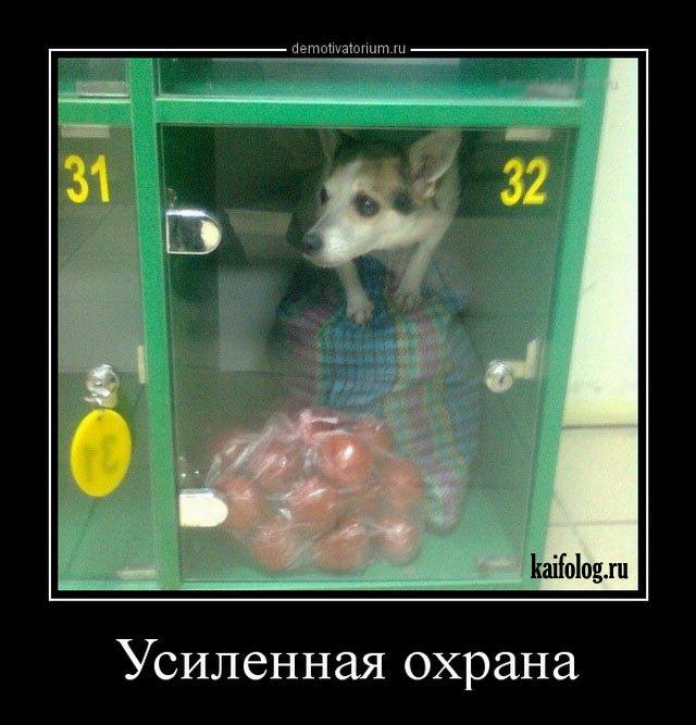 Русские демотиваторы (45 фото)