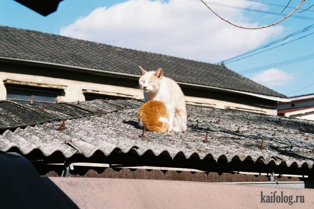 Фото приколы дня (55 фото)