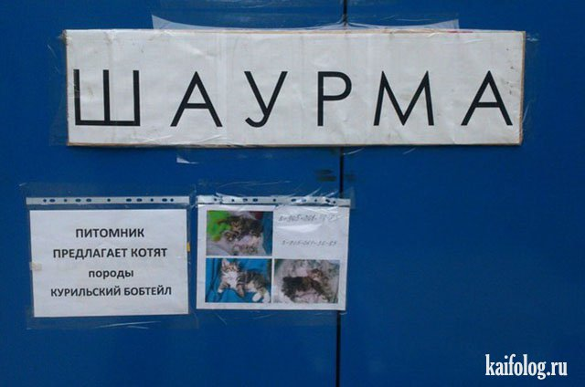 Маразмы дня по-русски (50 фото)