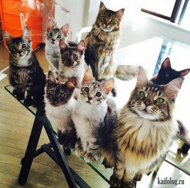 Синхронные коты (45 фото)