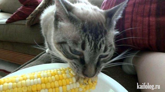 Коты, которые знают толк в еде (40 фото)