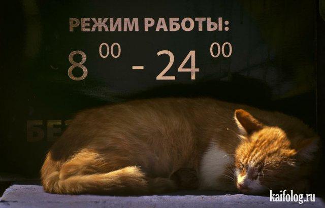 Русские приколы и маразмы (50 фото)