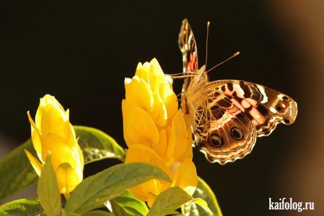 Красивые фотографии (50 фото)