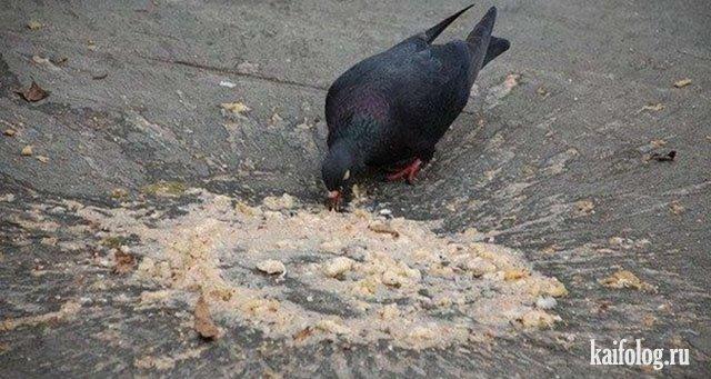 Ты - не ты, если голоден (45 фото)