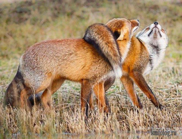 Смешные животные (45 фото)