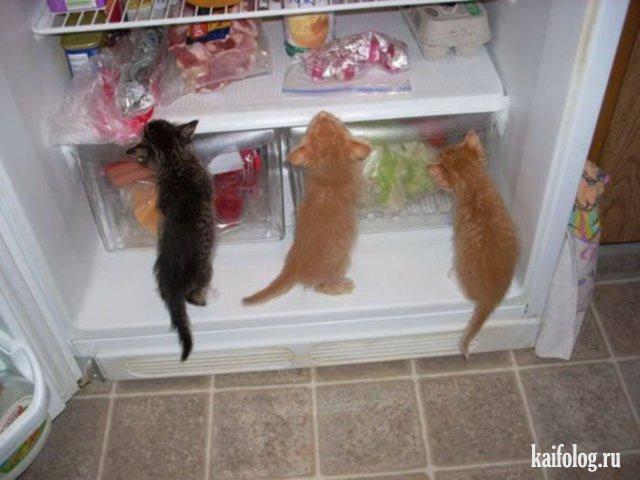 Кошечки (50 фото)