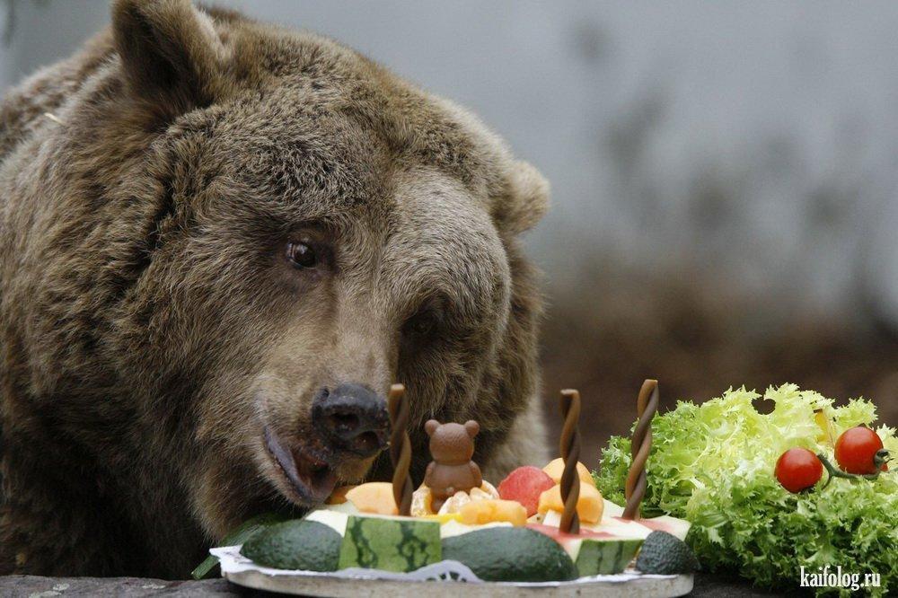 День рождение у медведя стих