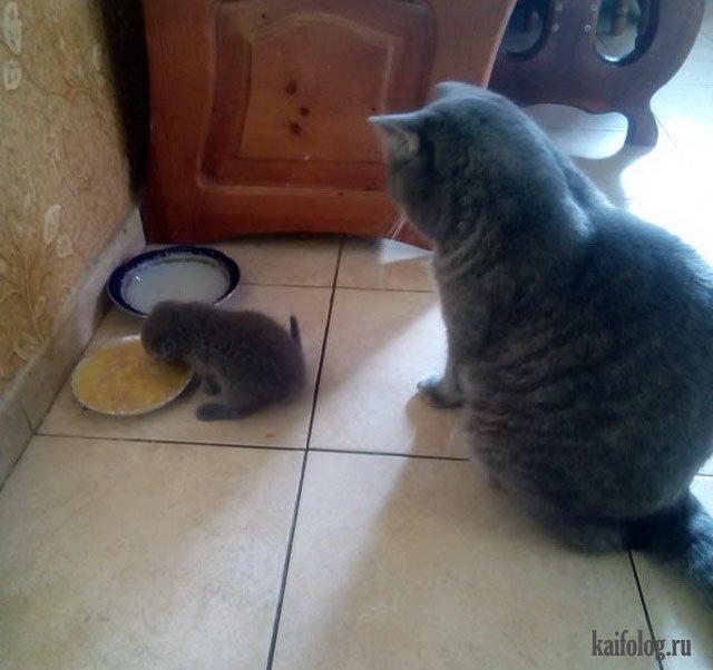 Коты года (55 фото)