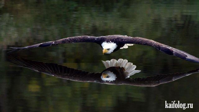 Красивые фотографии (45 фото)