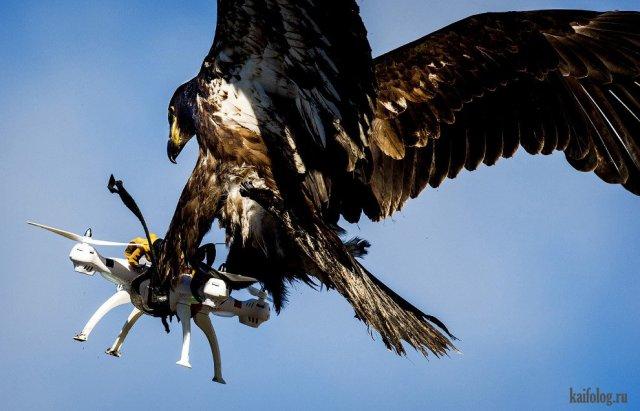 Приколы про животных и птиц (60 фото)