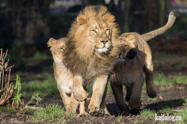 Новые приколы про животных (45 фото)