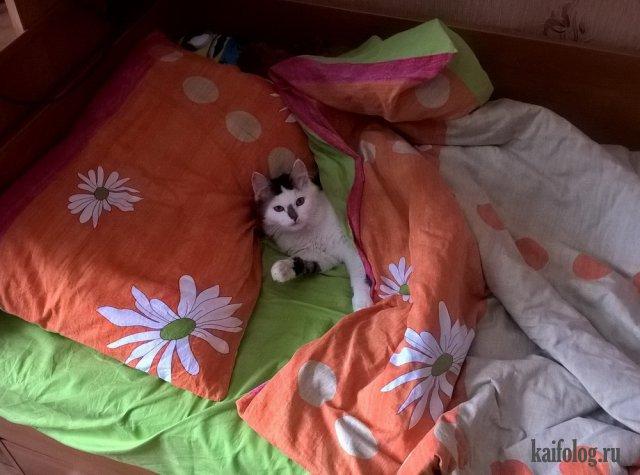Прикольные коты (40 фото)