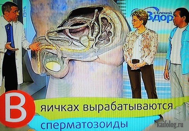 Паноптикум от Елены Малышевой (45 фото)