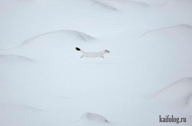 Прикольные фото животных (45 фото)
