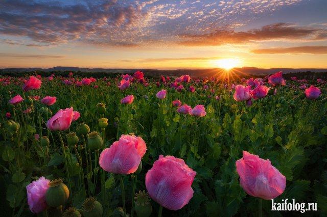 Естественная красота (55 фото)