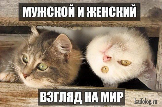 http://kaifolog.ru/uploads/posts/2017-03/1489982182_056.jpg