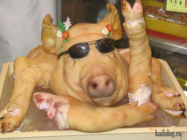 Это мясо! (50 фото)