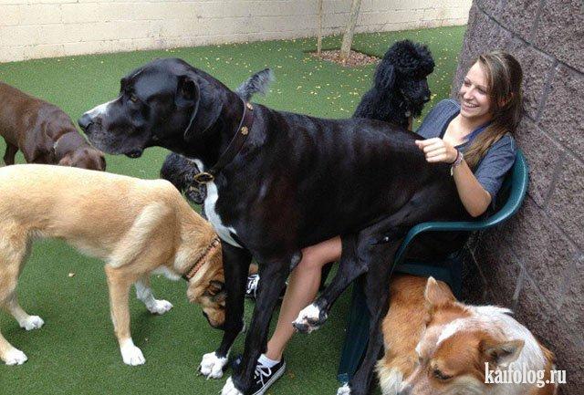 Самые большие собаки (35 фото)