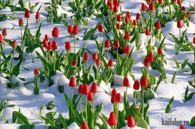 Весна пришла (55 фото)