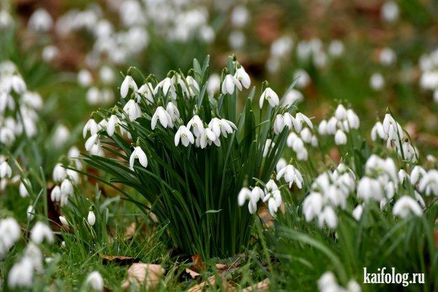 Нарисованные картинки весна (26 фото) 🔥 Прикольные картинки и юмор | 426x640