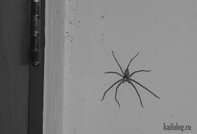 Домашние насекомые (45 фото)