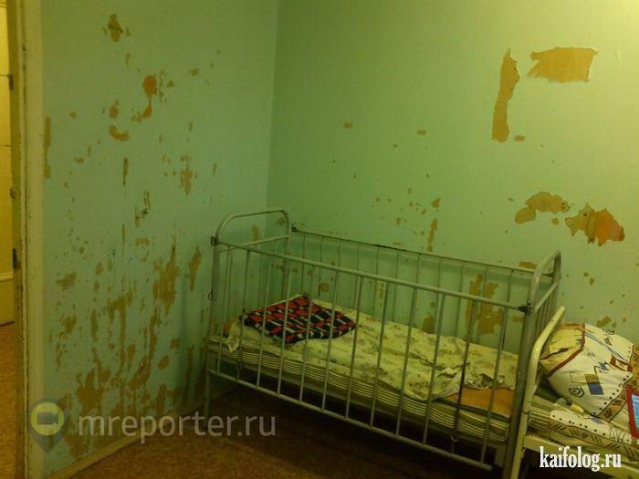 Ветеринарные клиник красноярск