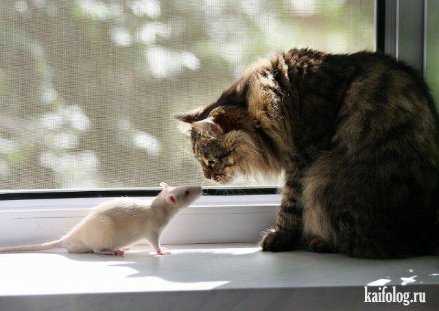 День крысы (40 фото)