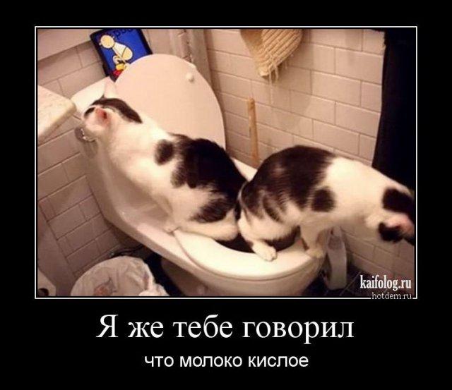 http://kaifolog.ru/uploads/posts/2017-04/thumbs/1491627288_007.jpg