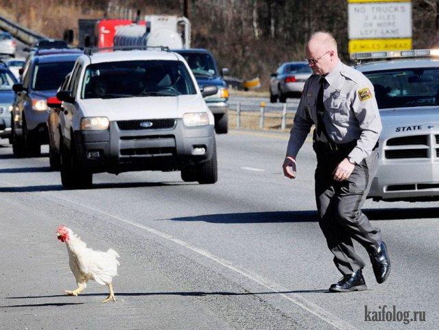 Приколы про куриц (45 фото)