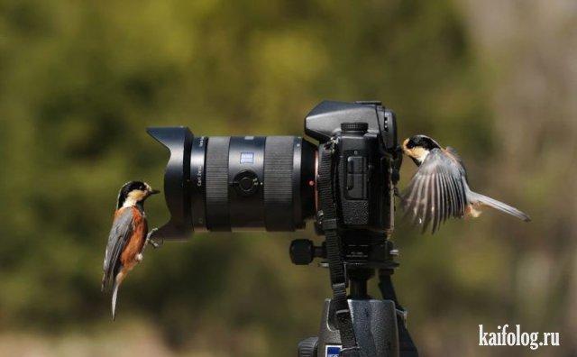 Животные приколы (45 фото)