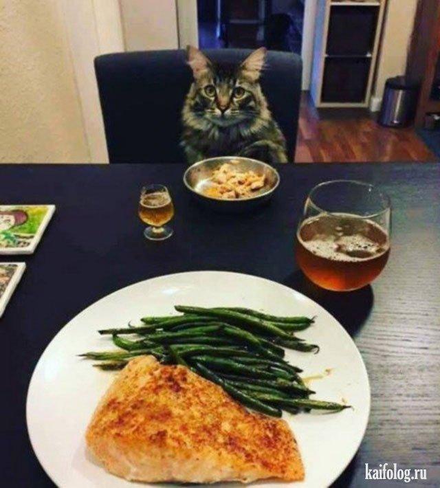 Его Величество Кот (45 фото)
