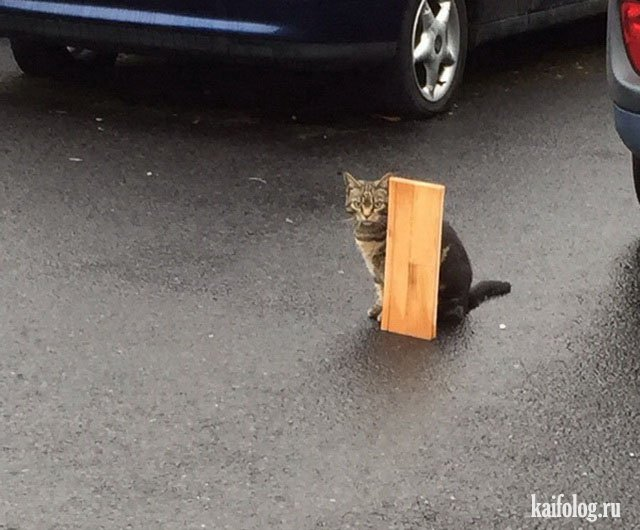 Весёлые коты (40 фото)