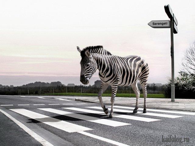 Необычный юмор (55 фото)