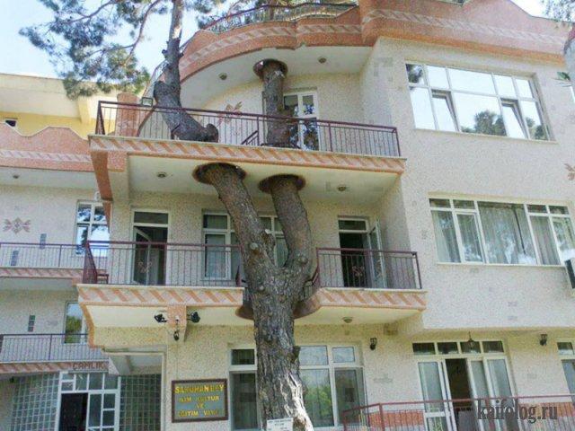 С заботой о деревьях (40 фото)