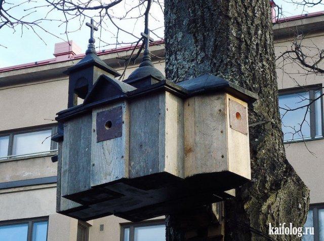В России любят птиц (45 фото)