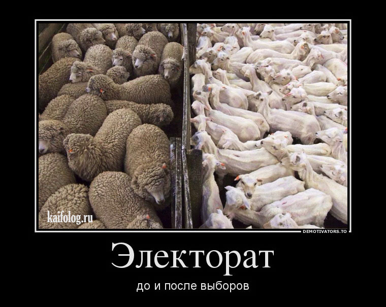 демотиваторы про овец нашем