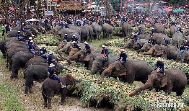Приколы из Таиланда (45 фото)