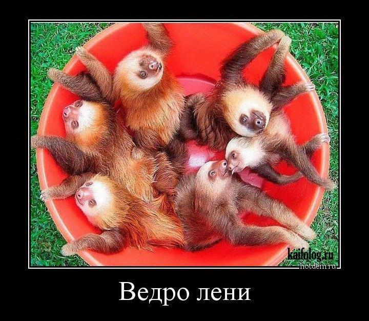 картинки про ленивых животных ОТДЕЛЕНИЕ