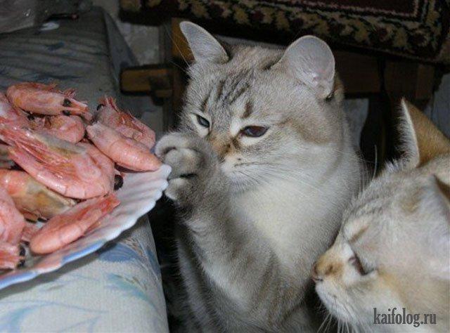 Коты-воришки (45 фото)