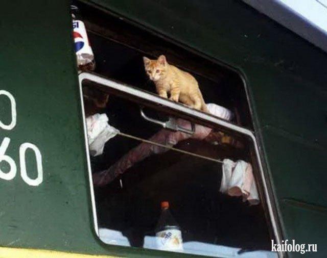 фото прикольные едут домой на поезде разные горнолыжные