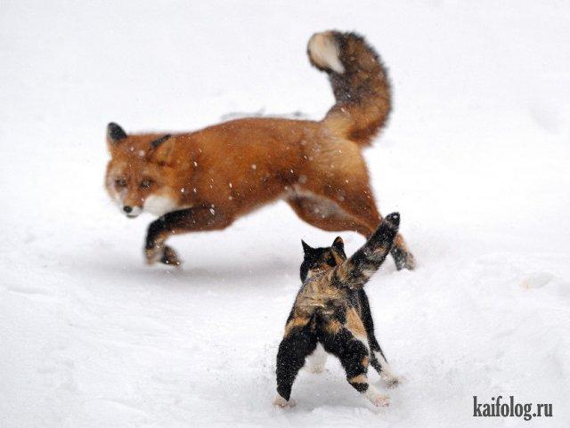 Фото приколы с животными (50 фото)