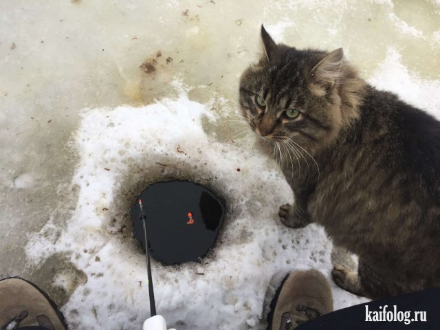 Фото приколы про котов (50 штук)