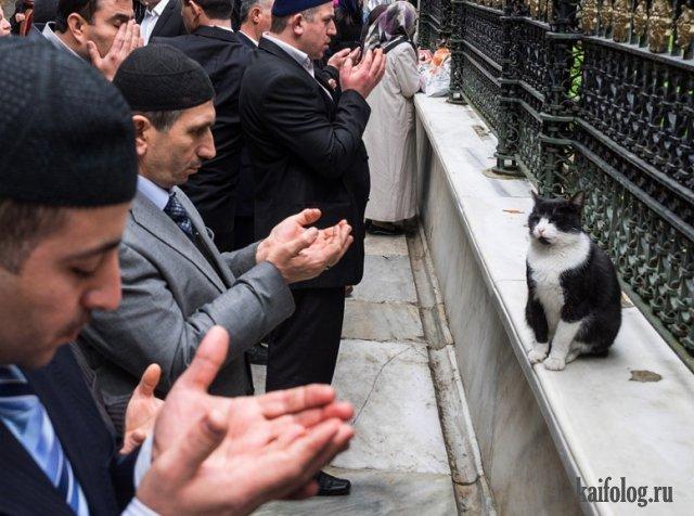 Осторожно, религия! (45 фото)