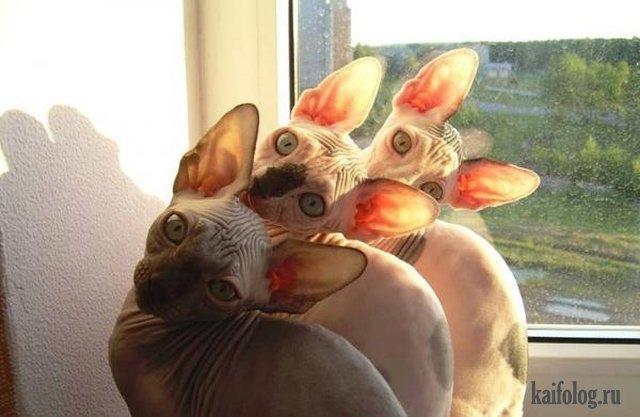 Эти забавные животные (45 фото)