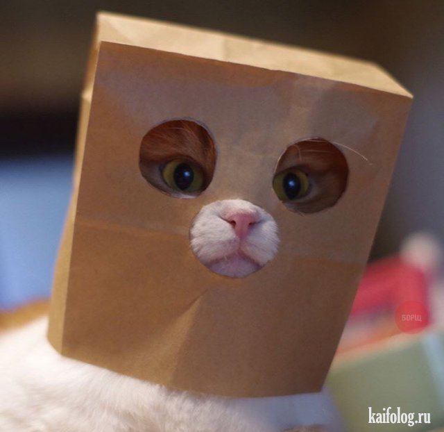 Прикольные котики (45 фото)