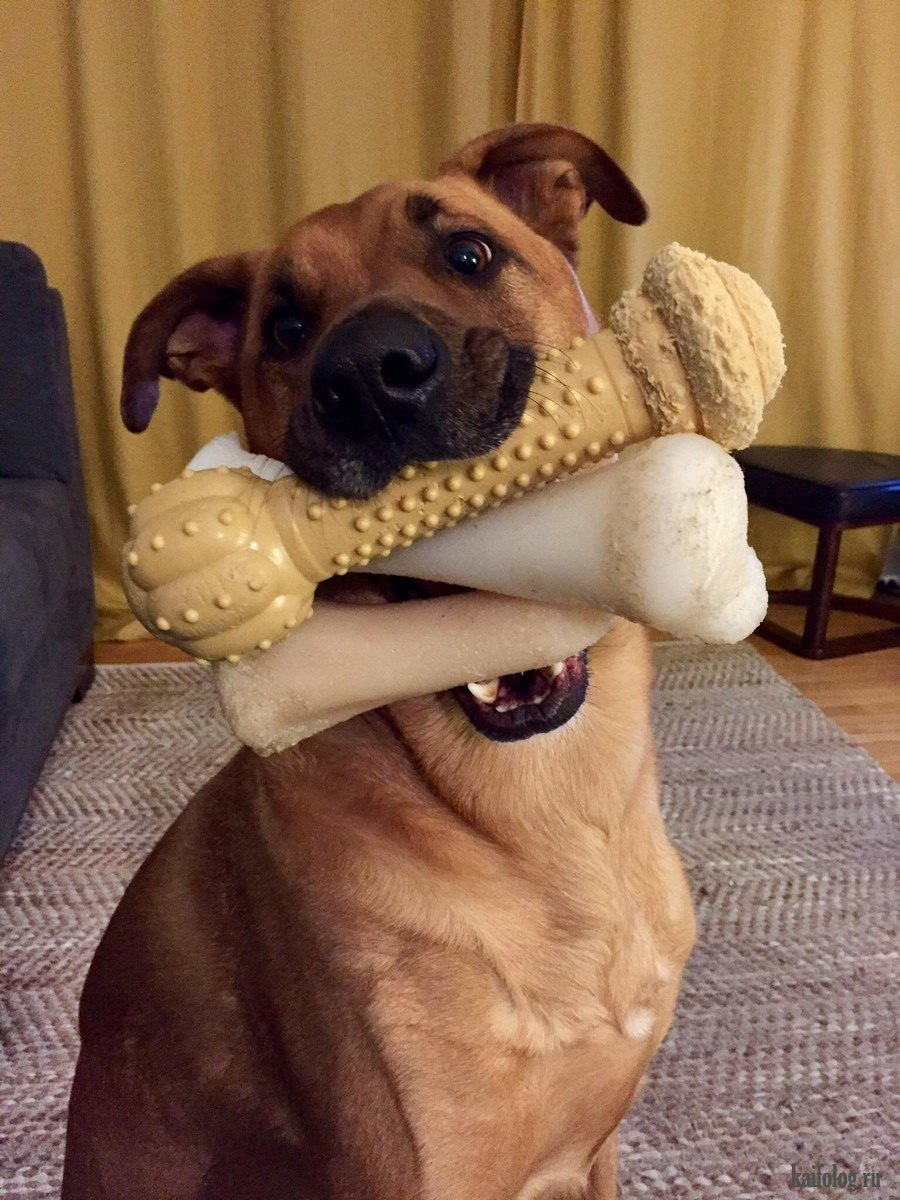 Смешное про собак картинки