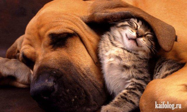 Прикольные домашние и дикие животные (45 фото)