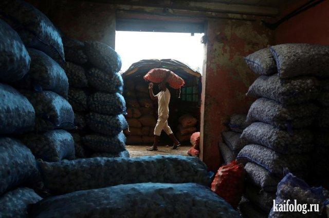 Типичная Индия (60 фото)
